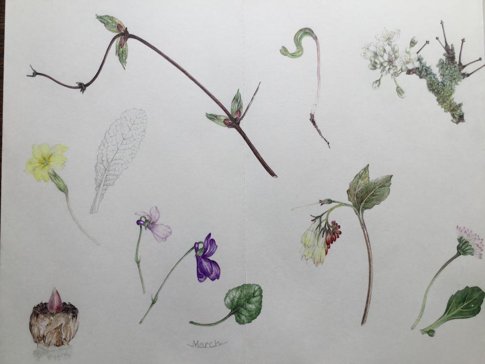 Illustration by Christina Renwick